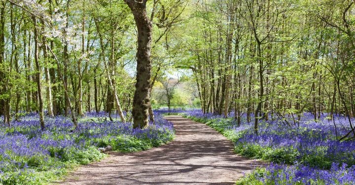 Get close to nature at Wilderness Wood, East Sussex